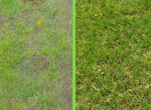 Image showing yard before and after using SeptiBlast? septic tank cleaner